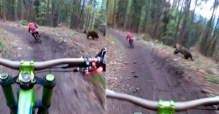 В сети появилось уникальное видео преследования медведем велосипедиста во время его проезда полесу.