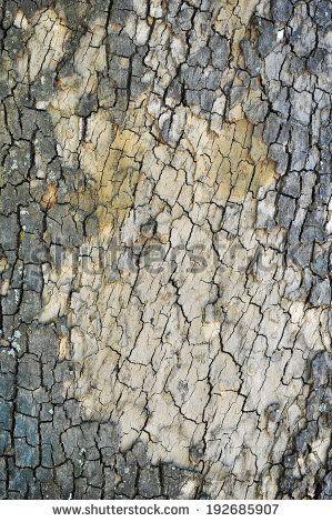 cracked brown tree bark texture - stock photo