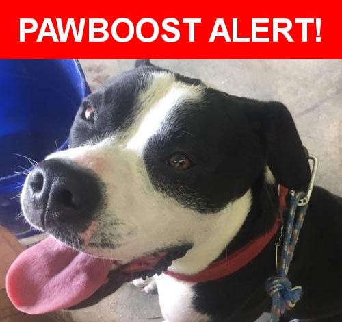 Is this your lost pet? Found in Simpsonville, SC 29680. Please spread the word so we can find the owner!  We found this black & white male dog, he looks like a boxer &/or pit mix (?). He is neutered. He's very friendly, well behaved dog. He appears to have been well taken care of, someone has to be missing him.   Nearest Address: Hwy 418, Simpsonville, SC