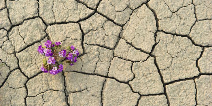 o-FLOWER-DESERT-facebook.jpg 2,000×1,000 pixels