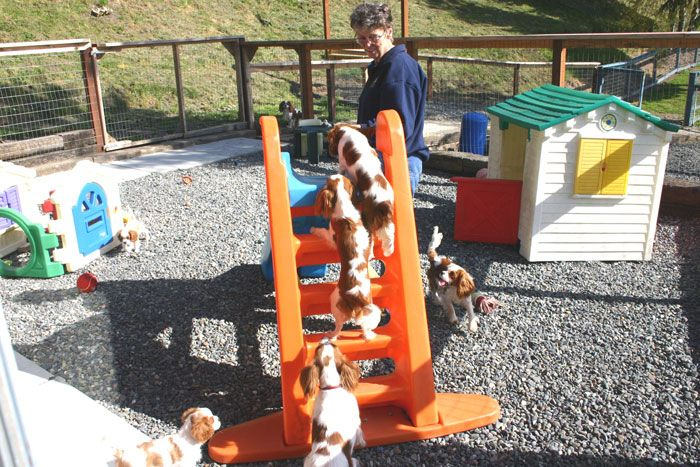 keep them busy!: Outdoor Plays Area, Crafts Ideas, Dogs Stuff, Dogs And Kids, Pet Photos, Dogs Running, Dogs Yard, Dogs Plays Yard, Yard Ideas