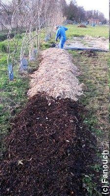 Culture des pommes de terre sur gazon