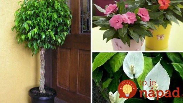 Pestovanie pre zaneprázdnených: Týchto 11 izbových rastlín vydrží aj náročné podmienky!