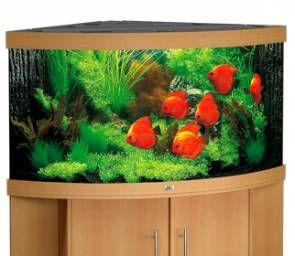 Juwel Trigon 350 Fish Tank