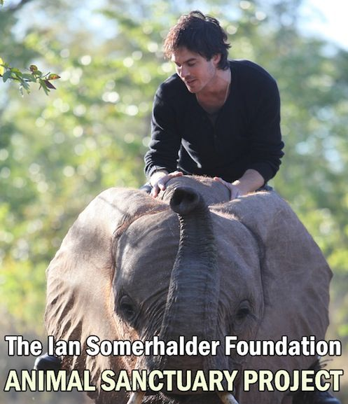 """His bad boy alter ego, Damon Salvatore, may have spent the last century breaking hearts and compelling minds on """"The Vampire Diaries,"""" but in real life, #Ian Somerhalder takes a more subtle approach to changing minds and actions with his nonprofit, the ISFoundation."""