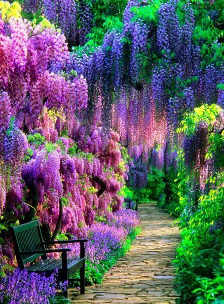 Wisteria Tunnel, Kawachi Fuji Garden, Japan. Click to shop Matthew Williamson beachwear.
