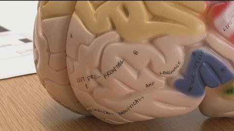 Hjärnskador