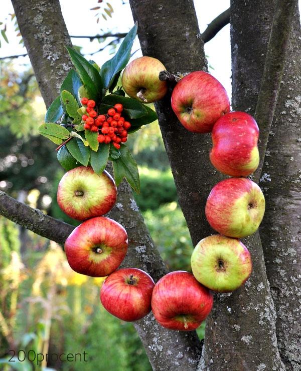 Rautalankaa ja muutama omena - kranssi valmistuu hetkessä. Tämän voi jättää ulos pikkulintujen ruoaksi.