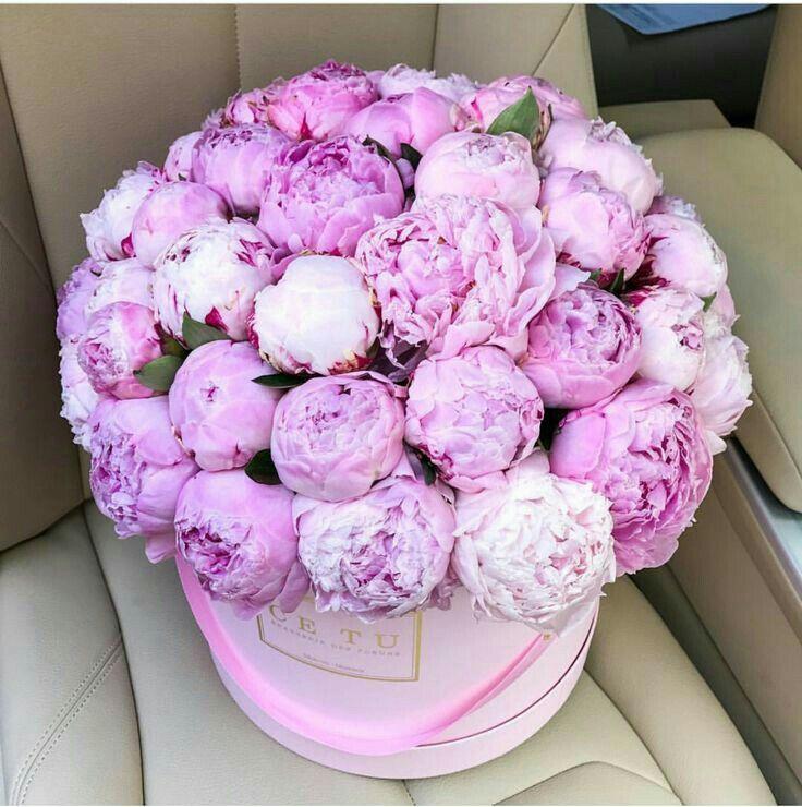 картинки цветов букеты с пионами утренний запуск холодами