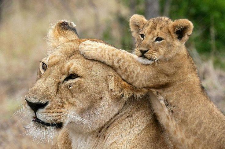 """"""" #Mamma, fammi controllare se hai la febbre!!"""""""