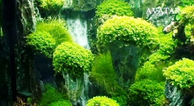 Avatar landscaping aquarium with underwater waterfalls Aquarium landscape