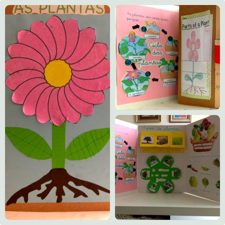 Lapbook: ciclo de las plantas