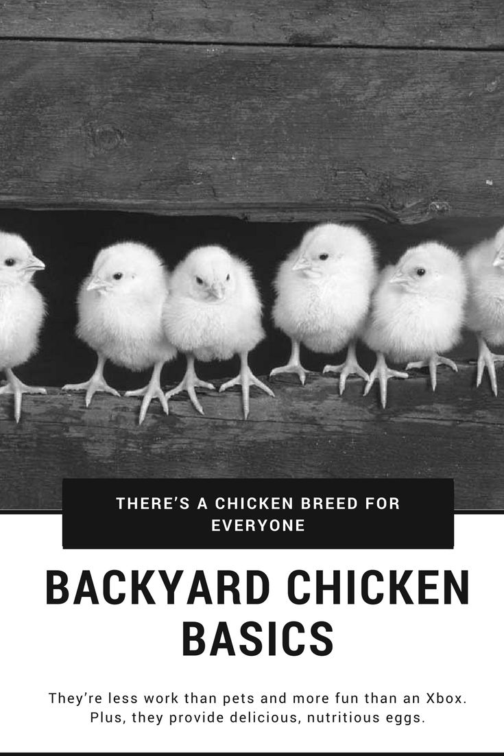 615 best homesteading and livestock images on pinterest mother