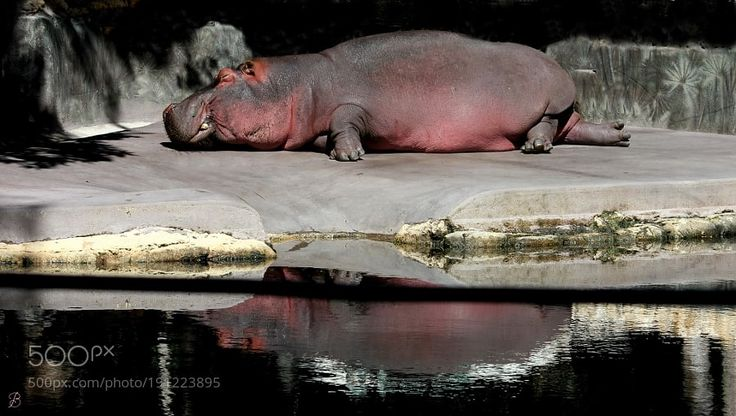 Hippo Sweat by redbug