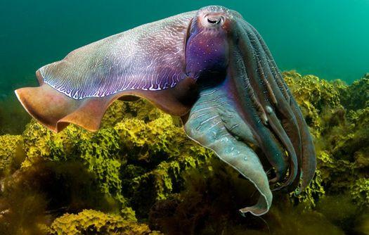Under the Sea 3D | IMAX Melbourne | Under the Sea | Pinterest ...