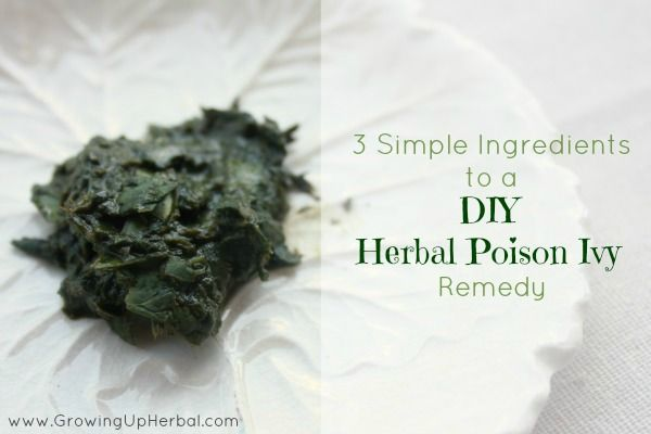 DIY Herbal Poison Ivy Remedy