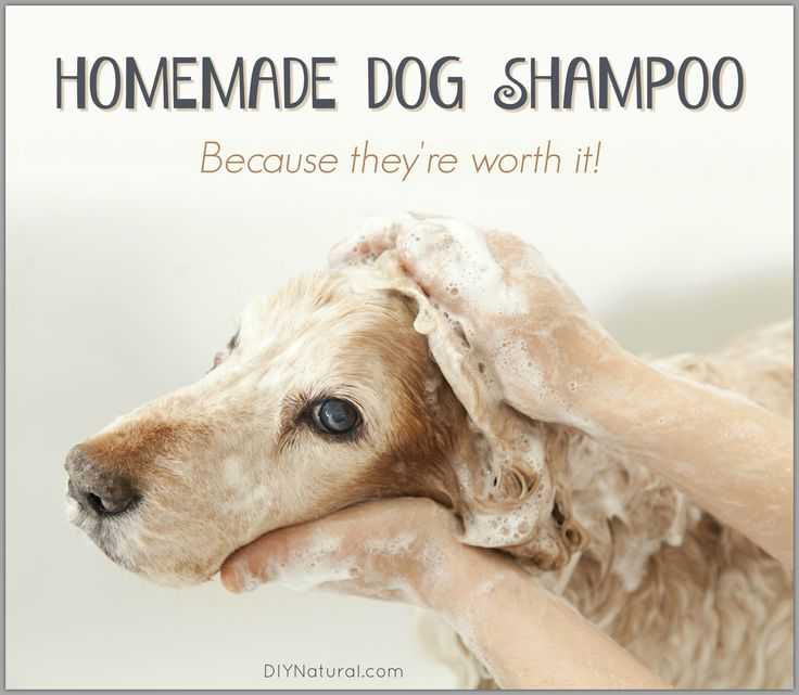 A homemade dog shampoo perfect for your dog(s). Their skin and hair pH are more acidic than ours so they need a special recipe; this natural recipe delivers.