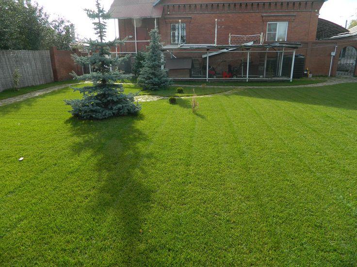 Посев газонной травы или газона