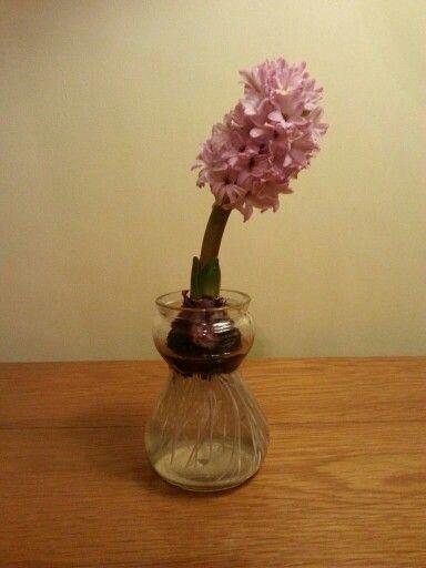 Bulb Rooting