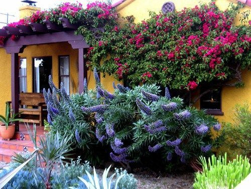 Front Yard Landscaping Ideas- Mediterranean front yard landscape