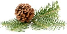 Foods high in Vitamin E #10. Pine Nuts- One serving contains 2.6 mg of vitamin E.