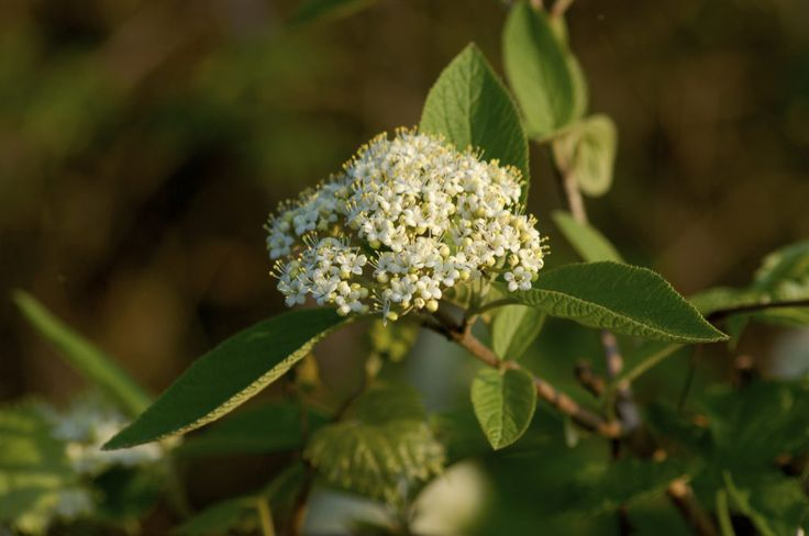 You don't need a garden that bakes in the sun all day to grow ornamental trees. Choosing small ornamental trees for shade area is a great option, and you'll have quite a variety to choose among. Click this article for suitable suggestions.