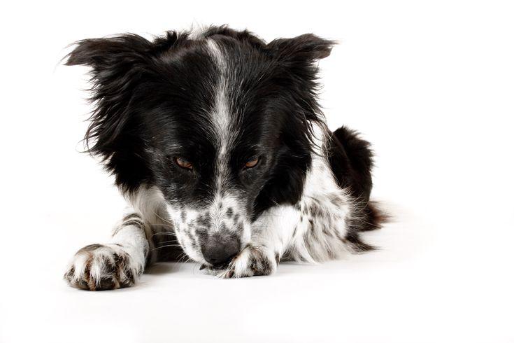Epsom Salt for Dogs | Cuteness.com