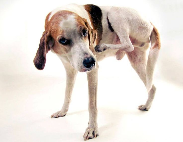SKIN DISEASES in DOGS & CATS | I LOVE HOMEOPATHY