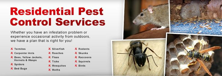 Waltham Pest Control – Home Mobile #boston #pest #control http://trinidad-and-tobago.nef2.com/waltham-pest-control-home-mobile-boston-pest-control/  # Waltham Pest Control has been providing residential and commercial pest control services in MA for over 35 years. Call Today For A Pest Control Estimate 781-893-2146 Waltham Pest Control has been providing professional pest extermination and control services for over 30 years to home owners and business owners throughout Massachusetts. We are…