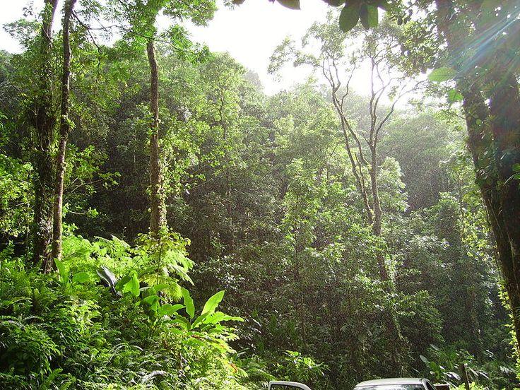 A tropical forest near Fond St. Denis, Martinique