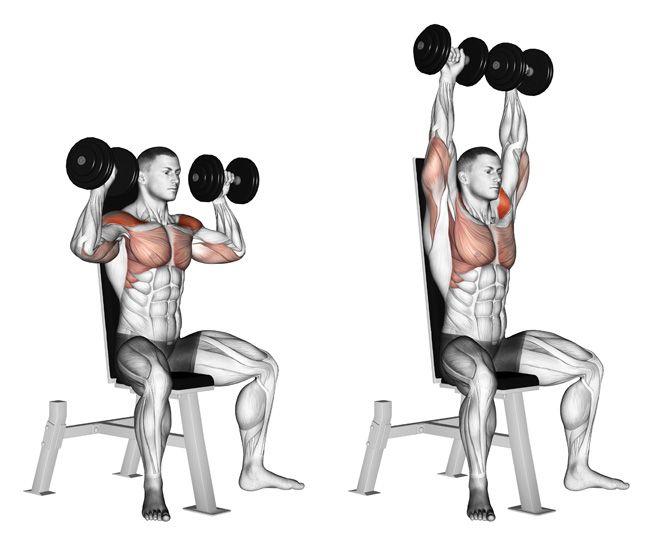 Image result for shoulder press