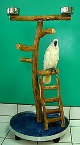Bird Play Stand | Parrot Play Stand | Dragonwood Ladder Large Bird