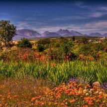 Namaqualand, Namibia    Photo by Barbara Youngleson