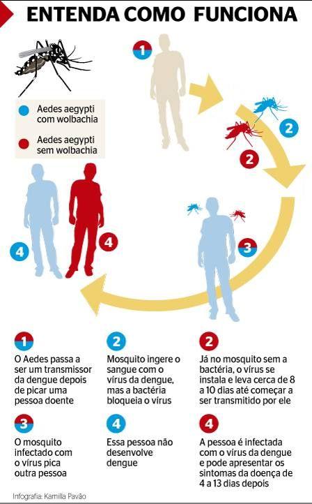 Solução no próprio mosquito: Fiocruz pretende usar Aedes infectado com bactéria para impedir contágio da dengue