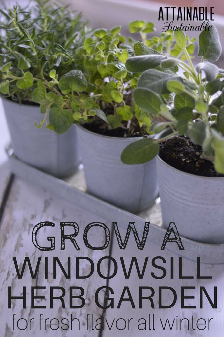 A windowsill herb garden makes fresh flavor convenient throughout the winter; it's also a good option year round for urban apartment or condo dwellers.