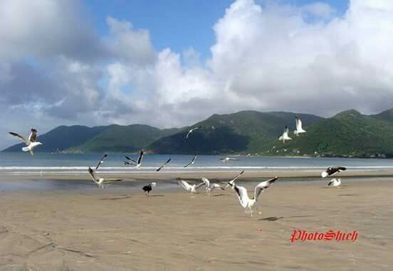 Pantano do Sul Beach - Florianopolis - Brasil