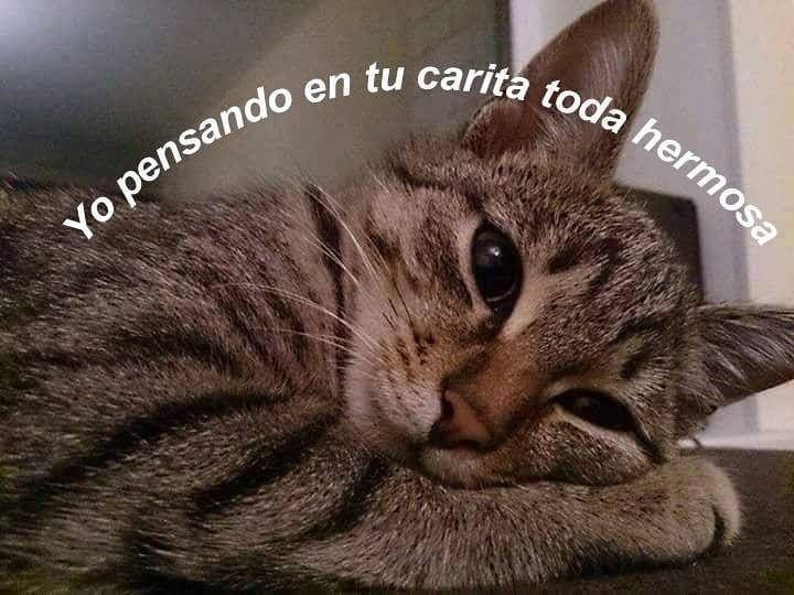 Meme Memes Memazos Memasos Memesespanol Memesdailys Chile Peru Argentina Colombia Costarica Urug Amor Animales Frases Animales Frases Frases Kawaii
