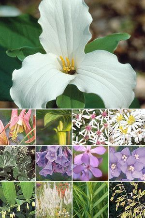 25 Plant Woodland Shade Garden (for medium soils in full to partial shade)