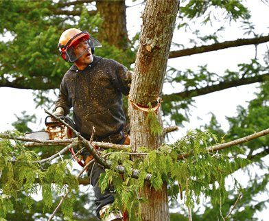All tree & Stump Removal is one of the Leading Tree removal Service in Adelaide. To find out more about our excellent range of tree removal and maintenance services, call our Expert team  on0439 686 959.