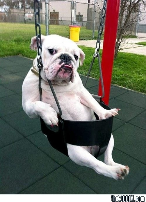 Oh you know... I'm just swing. What are you up do?