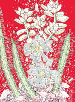 Succulents Eco-Notecards $14.95 : Chronicle Books
