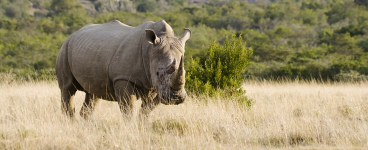 Protecting the rhino | Green24