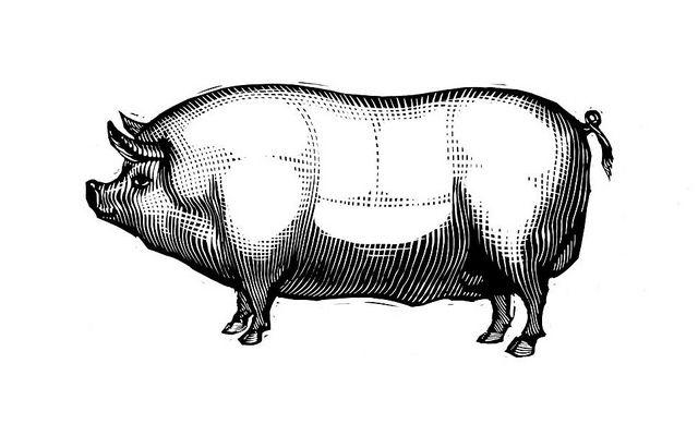 Pig   Flickr - Photo Sharing!