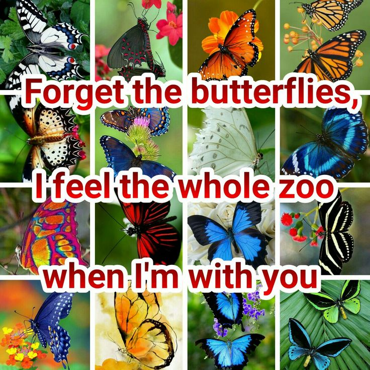 Forget the butterflies, I feel the whole zoo when I'm with you