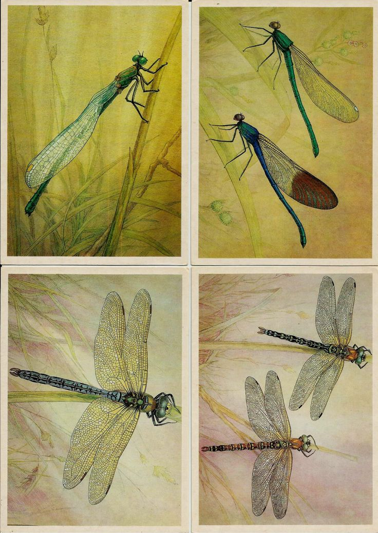 Insect Dragonfly dragonflies Dragon Flies Fly - Russian Vintage Postcard set of 16 by LucyMarket on Etsy