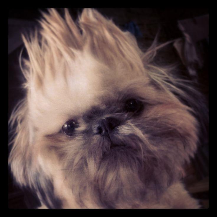 Ludovico com cabelo radical!!