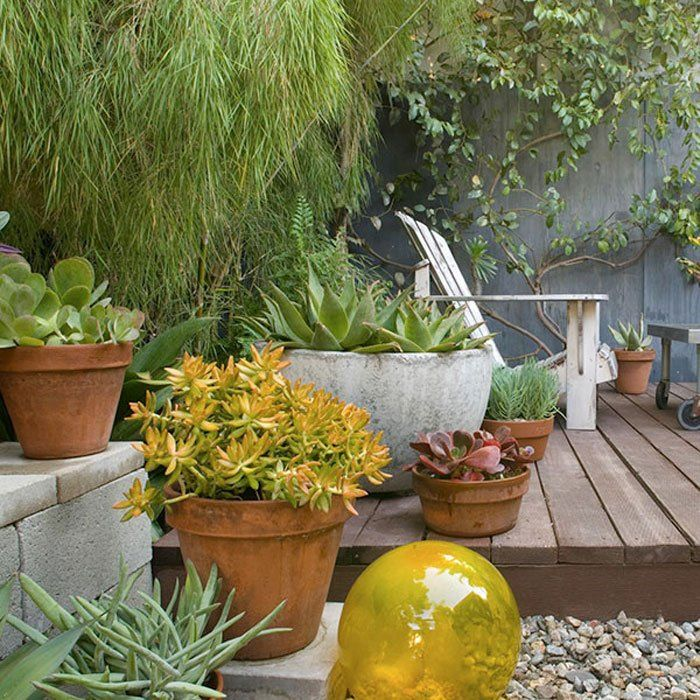5 Ways To Decorate Your Deck With Plants Large Backyard