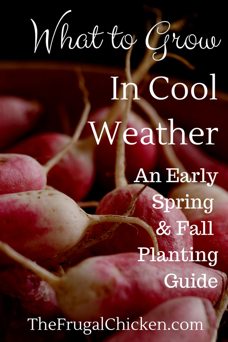 Itching to garden, but not sure what to grow yet? Here's some answers in this guide for both early spring and fall. From FrugalChicken