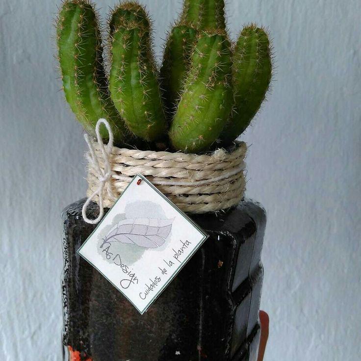 Envase reutilizado de vidrio  Acabados en cabulla  Cactus