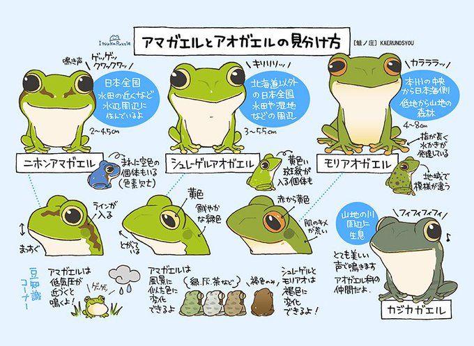 20 蛙ノ庄 名古屋三省堂ブックカバー7 19 日 マデ さんはtwitterを使っています アマガエルとアオガエル完成しました ニホンアマガエル シュレーゲルアオガエル モリアオガエル おまけで カジカガエル さんです カエル 蛙 Frog Http